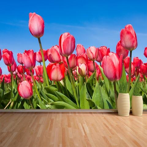 Fotomural - Tulipanes 2