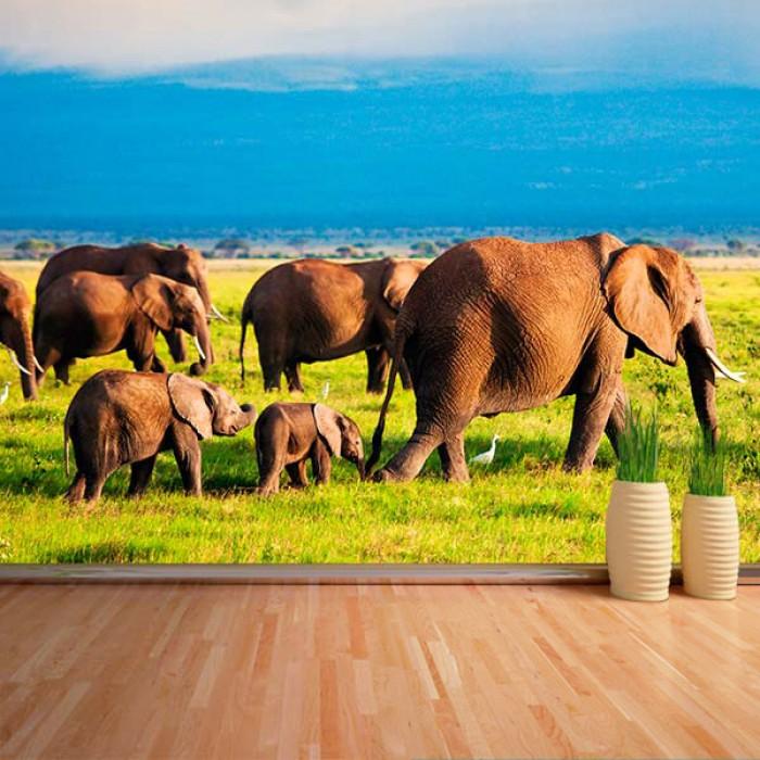 Fotomural - Elefantes