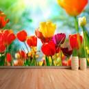 Fotomural - Tulipanes de colores