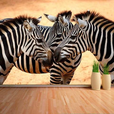 Fotomural - Cebras