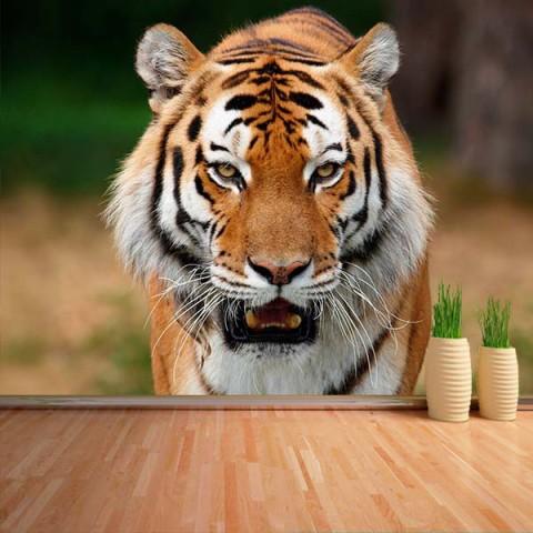 Fotomural - Tigre