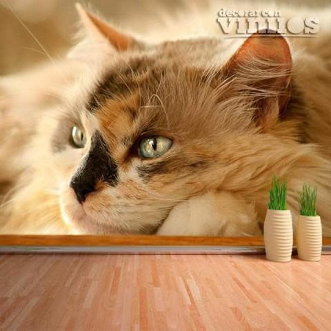 Fotomural - Gato