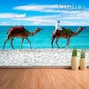 Fotomural - Camellos