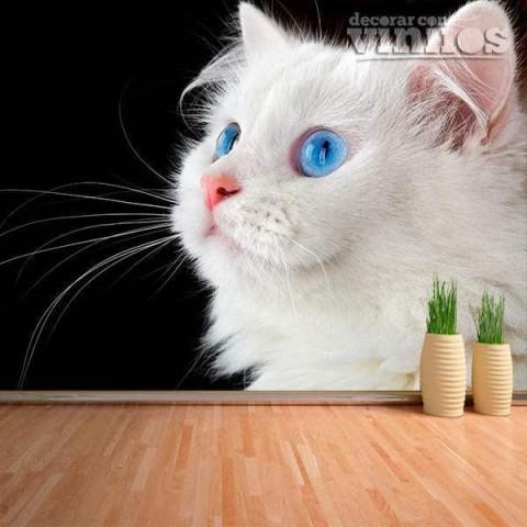 Fotomural - Gato Blanco
