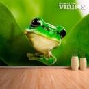 Fotomural - Rana verde