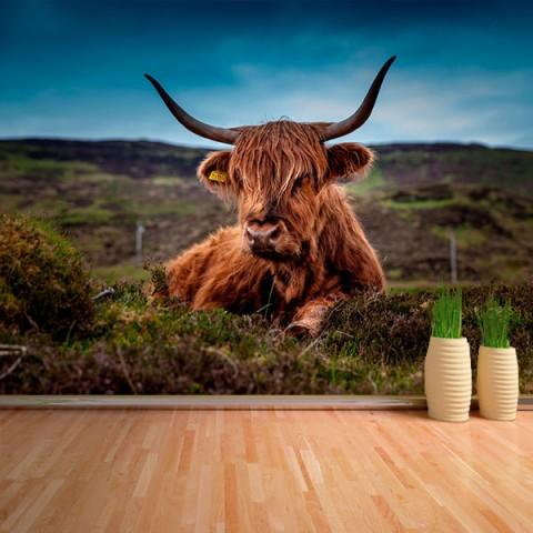 Fotomural - Vaca con cuernos