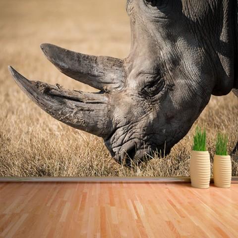 Fotomural - Rinoceronte
