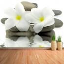 Fotomural - piedras y flores blancas