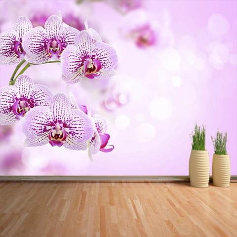Fotomural - Orquideas