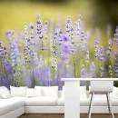 Fotomural - Flores de Lavanda