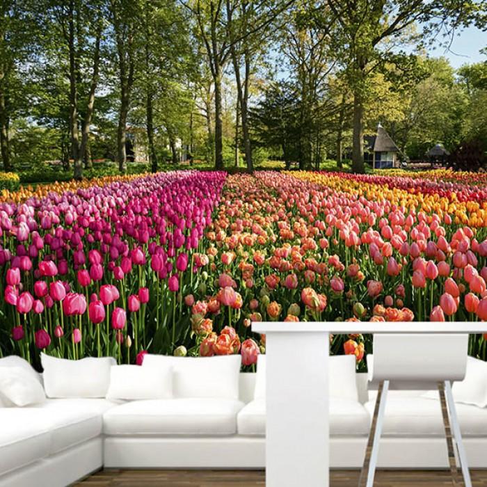Fotomural - Campo de Tulipanes