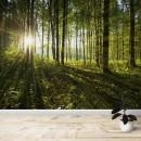 Fotomural - Árboles en el bosque