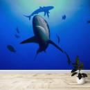 Fotomural -  Tiburon gris de arrecife