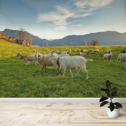 Fotomural - Granja ovejas y cabras