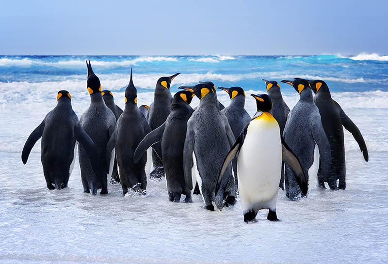 Fotomural - Pingüinos