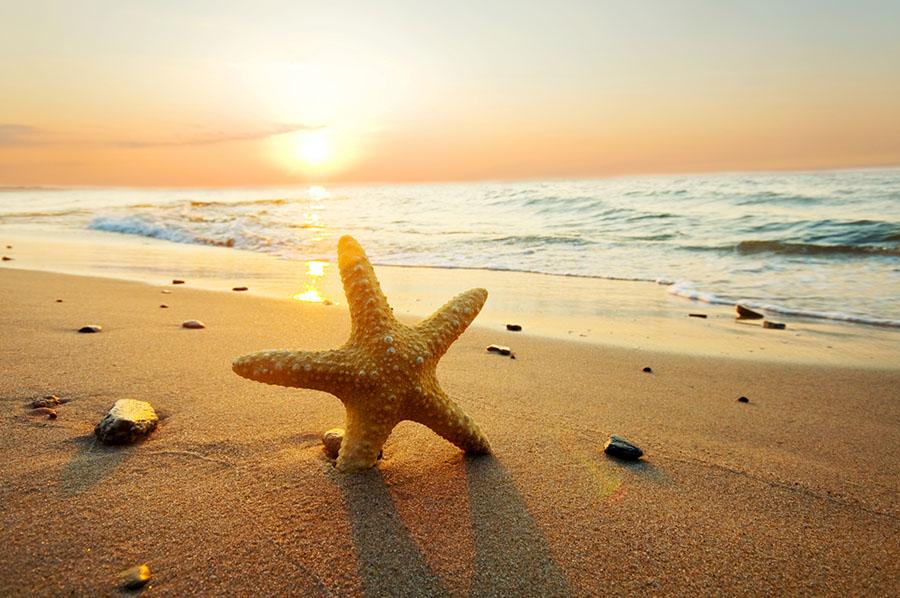 Fotomural - Estrella de Mar