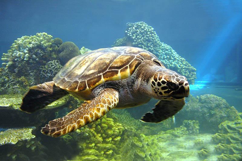 Fotomural -  Tortuga de Mar