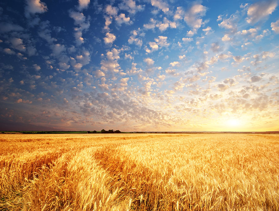 Fotomural - Amanecer en el campo