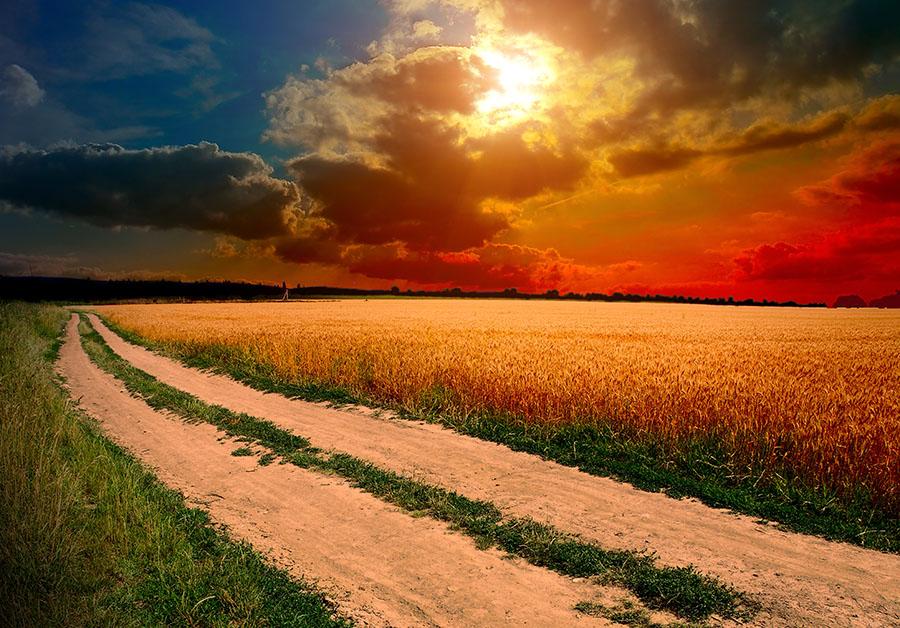 Fotomural - Camino en el campo al atardecer