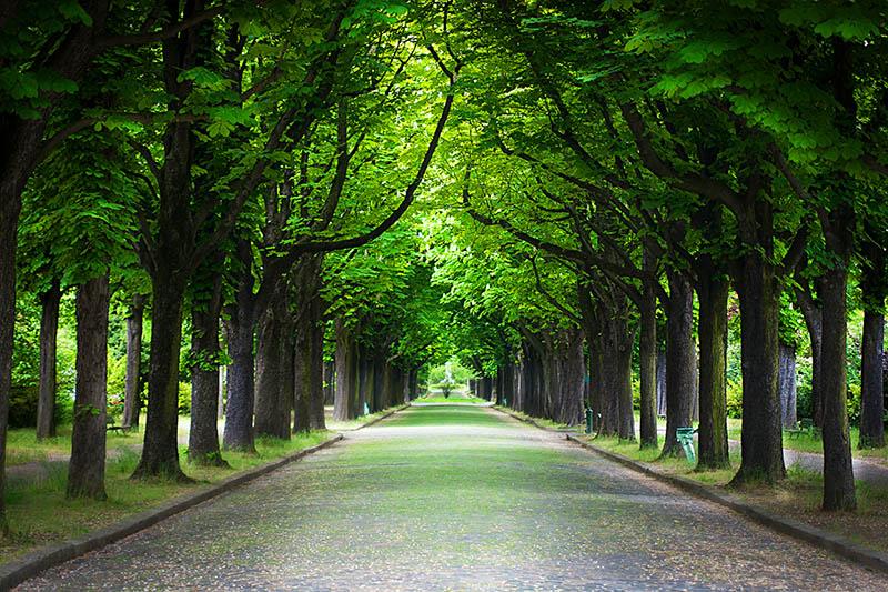 Fotomural - Camino rural entre los arboles