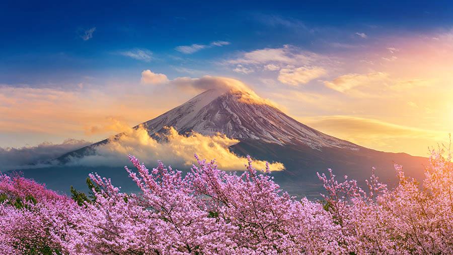 Fotomural - Monte fuji y Árboles de cerezos en japón